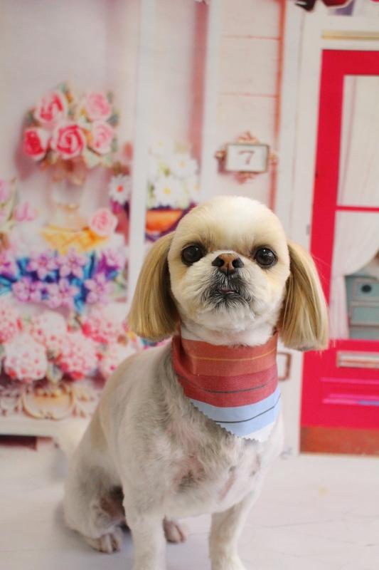 お顔真ん丸♡ 2時間半-コースから選ぶ-シニア(8才~)-シーズー-スピーディーカットコース-年齢から選ぶ-所要時間から選ぶ-犬種から選ぶ-カットスタイル