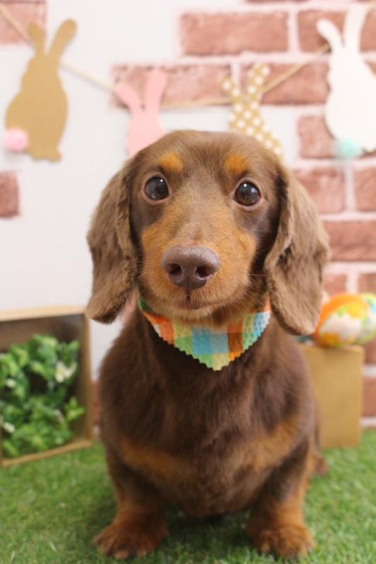 オールシザー♬♬ 2時間半-オールシザーコース-コースから選ぶ-シニア(8才~)-ダックス-年齢から選ぶ-悩み・特徴から選ぶ-所要時間から選ぶ-犬種から選ぶ-肌が弱い-カットスタイル