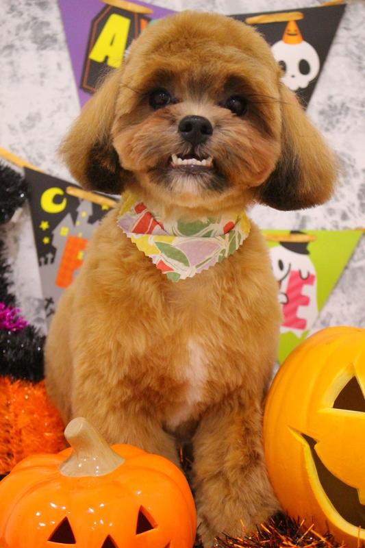 MIXくん♬ 2時間半-MIX犬-コースから選ぶ-パピー(3ヶ月~10ヶ月)-ペットカットコース-年齢から選ぶ-所要時間から選ぶ-犬種から選ぶ-カットスタイル