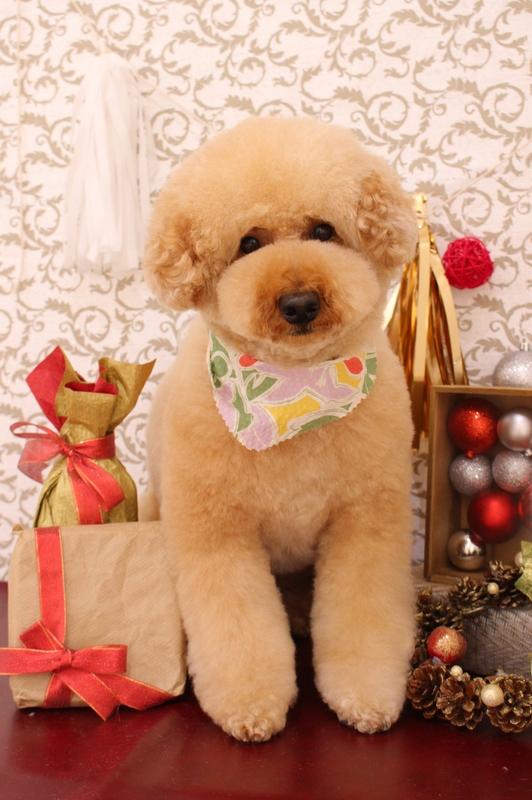 ふわふわカット♪ 3時間以上-アダルト(10ヶ月~8才)-オールシザーコース-コースから選ぶ-プードル-年齢から選ぶ-所要時間から選ぶ-犬種から選ぶ-カットスタイル