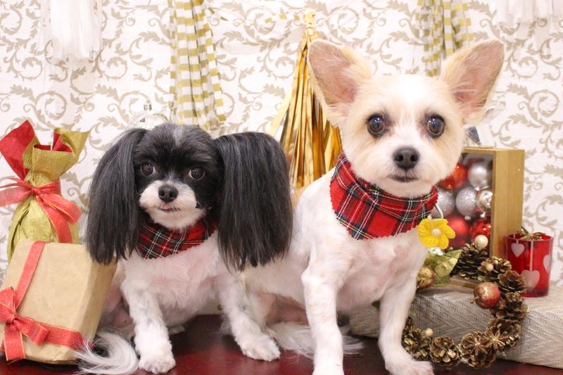 ♪仲良しさん♪ 2時間-MIX犬-アダルト(10ヶ月~8才)-コースから選ぶ-スピーディーカットコース-年齢から選ぶ-所要時間から選ぶ-犬種から選ぶ-カットスタイル