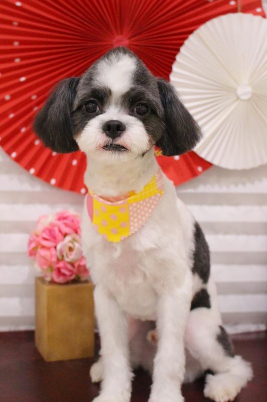ソフトモヒカン!! 2時間-MIX犬-コースから選ぶ-スピーディーカットコース-パピー(3ヶ月~10ヶ月)-年齢から選ぶ-所要時間から選ぶ-犬種から選ぶ-カットスタイル