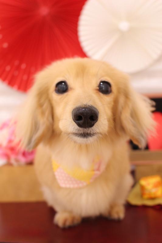 ☆グルーミングコース☆ 1時間-グルーミングコース-コースから選ぶ-シニア(8才~)-ダックス-年齢から選ぶ-所要時間から選ぶ-犬種から選ぶ-カットスタイル