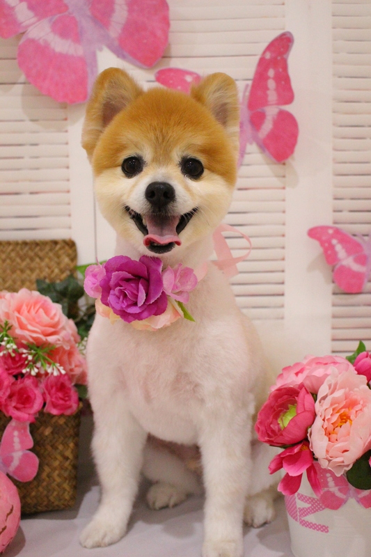 すっきりカット! 2時間-MIX犬-アダルト(10ヶ月~8才)-コースから選ぶ-スピーディーカットコース-年齢から選ぶ-所要時間から選ぶ-犬種から選ぶ-カットスタイル