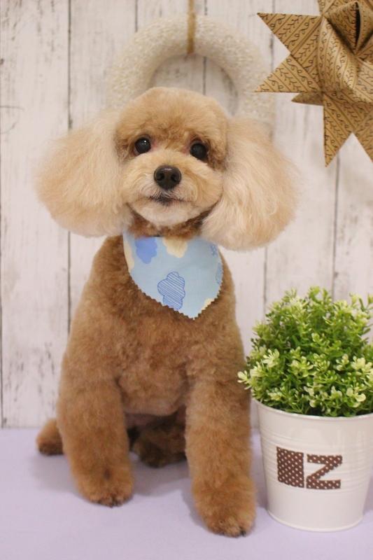 デティベア☆ 2時間半-アダルト(10ヶ月~8才)-コースから選ぶ-プードル-ペットカットコース-年齢から選ぶ-所要時間から選ぶ-犬種から選ぶ-カットスタイル