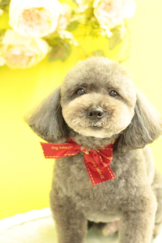 テディベア♡ 3時間以上-アダルト(10ヶ月~8才)-コースから選ぶ-プードル-ペットカットコース-年齢から選ぶ-所要時間から選ぶ-犬種から選ぶ-カットスタイル