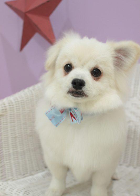ポイントカット 2時間-MIX犬-コースから選ぶ-パピー(3ヶ月~10ヶ月)-ポイントカットコース-年齢から選ぶ-所要時間から選ぶ-犬種から選ぶ-カットスタイル