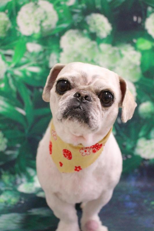 お顔バリカン☆ 2時間-MIX犬-アダルト(10ヶ月~8才)-コースから選ぶ-シーズー-スピーディーカットコース-年齢から選ぶ-所要時間から選ぶ-犬種から選ぶ-カットスタイル