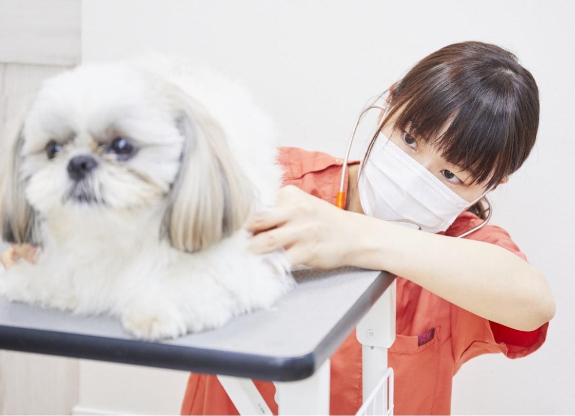 守山しっぽ動物病院の獣医師が診察