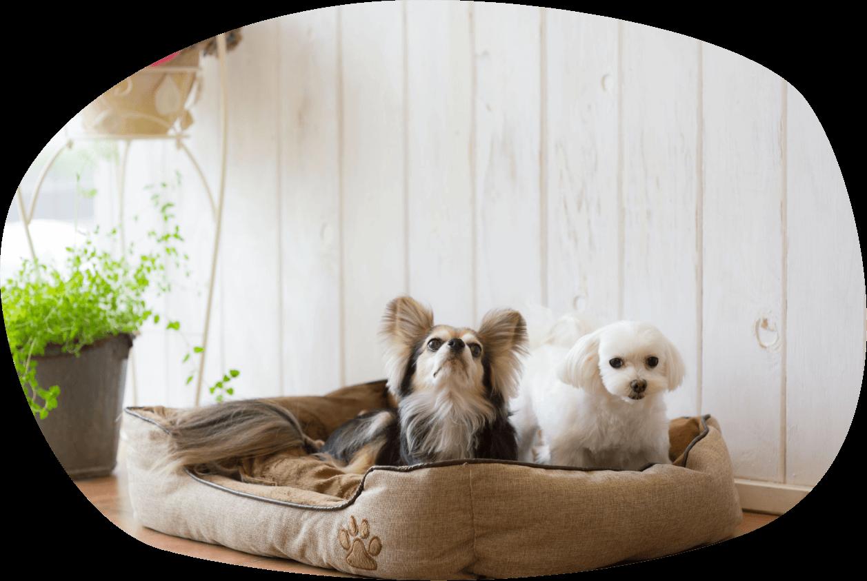 犬のペットシッター