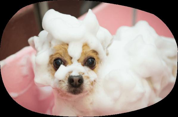 犬のシルクの泡パック